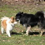 Lucas og Loke hilser