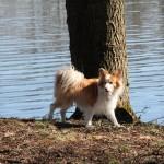 En ræv på kanten
