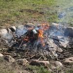 Oprydning af grene og kviste