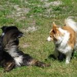 Loke og Lukas