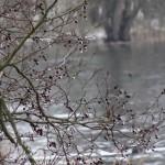 Is i træerne
