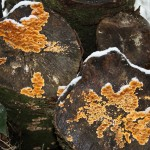 Brænde og grådige svampe