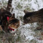 Et lille kattemøde