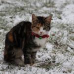 Julepyntet kat