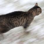 Kat i bevægelse