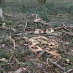 Skovning