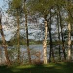 TræerVedSøen